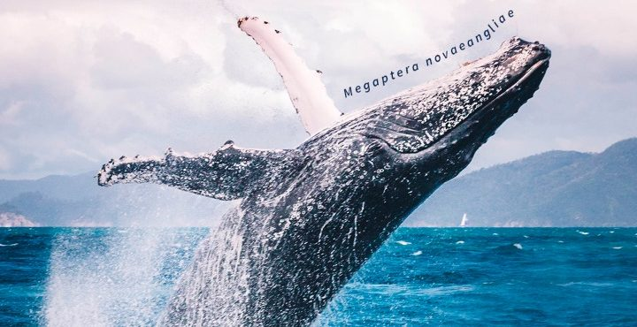 Día Mundial de las Ballenas