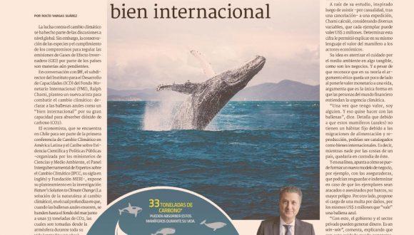 [DF] Experto del FMI propone declarar a la ballena azul como un bien internacional – Diario Financiero