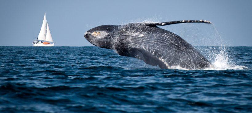 [Futuro 360] Chile es el primer país latinoamericano en instalar boyas inteligentes para proteger a las ballenas y al medio ambiente